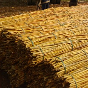 Harvesting and Processing of Rattan