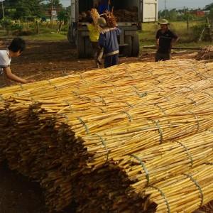 113301 Rattan Raw Material